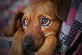 Perros atrapados en una tubería