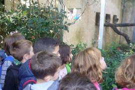 Alumnes del CEIP Es Canyar de Manacor varen visitar Natura P