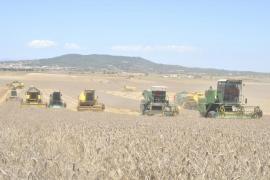 Agricultura y cambio climático en Baleares: cuestión de supervivencia