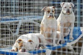 Sa Coma habilita nuevas jaulas para perros y una gatera para una colonia felina