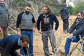 San Antoni en Son Servera: La leña ya está lista para los 'foguerons'