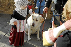 Festes de Sant Antoni 2019.