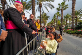 Locura perruna para recibir la bendición de San Antonio Abad