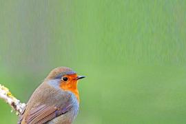 El tranquilo invierno en Ibiza de las aves migrantes