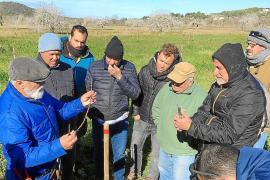 Los campos de Corona se convierten en escuela para aprender a 'empeltar'