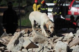 La Unidad Canina de los Bomberos reducirá el tiempo de búsqueda de los desaparecidos