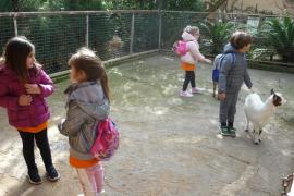 Alumnes d' Infantil del Ceip Mitjà de Mar de Porto Cristo varen visitar Natura Parc