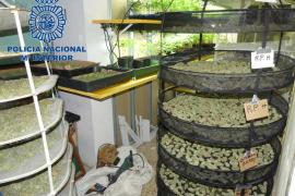 La Policía Nacional desmantela una plantación de marihuana dentro de un antiguo almacén en Ibiza