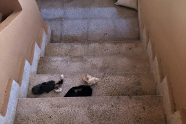 Muere indigente en Es Pil·larí