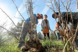 Nace un nuevo campo de almendros en Forada