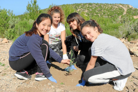 El CEIP Santa Gertrudis planta 120 sabinas en las laderas de Benirràs