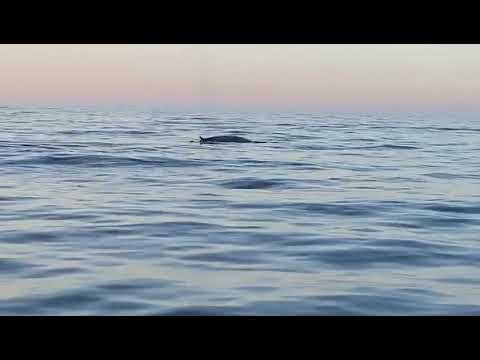 Avistamiento de una ballena en aguas de Ibiza