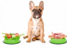 ¿Qué son las dietas crudas para nuestras mascotas?