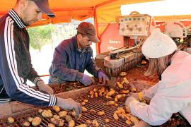 Campaña de recolección de la patata en sa Pobla