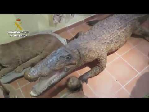 Desarticulan una red liderada en Mallorca de comercio ilegal de animales de especial protección