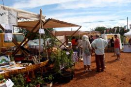 Cita con los 'calçots' más ecológicos de Ibiza en el Mercat de Forada