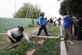 Huertos ecológicos en los colegios de Sant Antoni para fomentar la alimentación sana