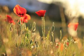 Flores que brotan desde el suelo
