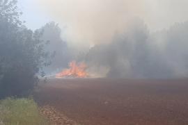 Ibanat y bomberos trabajan en la extinción de un incendio en Santa Gertrudis