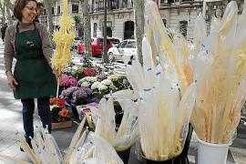 Palmas en una floristería de La Rambla