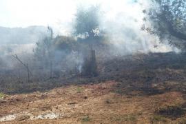 Efectivos del Ibanat y de los bomberos sofocan un incendio agrícola en Santa Eulària