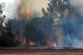 Alarma por la sucesión de quemas de poda que han originado varios incendios