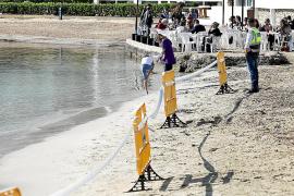 Marí Bosó dice que el cierre de Talamanca por vertidos daña la imagen de Ibiza y no una campaña en redes