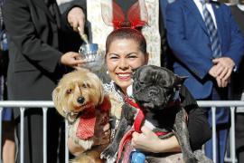 Sanciones de hasta 3.000 euros por abandonar un animal en Sant Antoni