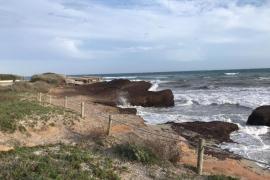 La posidonia retirada de las playas de Formentera se dará a los campesinos para su uso tradicional
