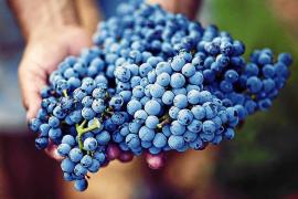 Gestión integral del viñedo para un vino de más calidad