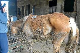 Una asociación animalista denuncia el estado moribundo de una yegua en Ibiza
