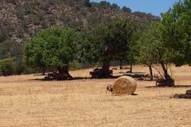 Calor en Mallorca
