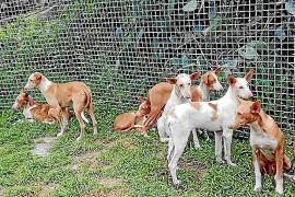 Críticas a Sant Josep por contratar a Natura Parc para la gestión de animales abandonados