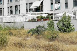 Un solar abandonado se convierte en un nido de ratas para los vecinos de Es Pla de Vila