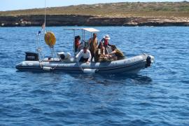 Liberadas tres tortugas en aguas de Ibiza