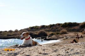 Playas en Mallorca para darse un chapuzón con perros