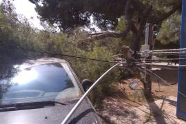 Tres coches y parte del tendido eléctrico dañados por la caída de un pino en Sant Antoni