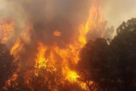 El incendio de Portinatx, en imágenes. Fotos: Marcelo Sastre