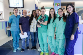La Clínica Veterinaria San Jorge necesita urgentemente donaciones de sangre de gatos