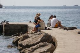El PP exige medidas contra la proliferación de ratas en la ciudad de Ibiza