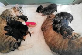 La Asociación Basta Ya de Maltrato Animal ofrece ayuda para la esterilización de gatos