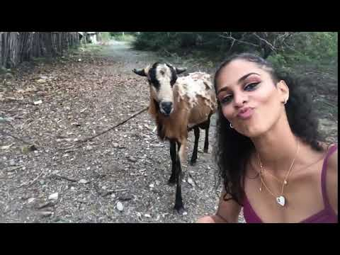 Una chica, una cabra, y un selfi que no acabó como esperaba