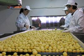 Exportación de patata mallorquina