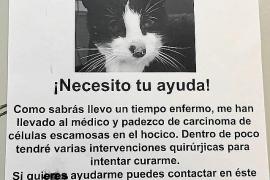 Trabajadores del puerto de Ibiza buscan fondos para operar al gatito Pitu de cáncer