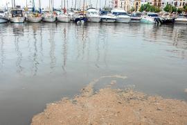 El puerto de Ibiza y el paseo de ses Figueretes se llenan de fecales y residuos por la tormenta