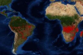 África Central arde con mayor número de focos activos que el Amazonas