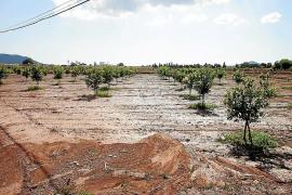 El campo agradece la DANA que ha empapado la tierra para otoño