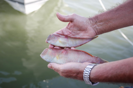 «No es un día de pesca normal, para los ibicencos a los que les gusta el mar es una gran fiesta»