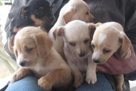 Recuperada una camada de perros abandonados en Sant Josep
