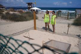 Nacen cinco tortugas de los huevos depositados en verano en playas de Ibiza